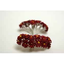 fleurs : 24 marguerites bordeaux